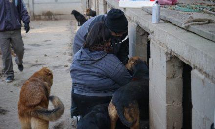 El Municipio trabaja de manera comprometida en concientizar sobre la tenencia responsable de mascotas y tomar a la problemática como tema salud pública